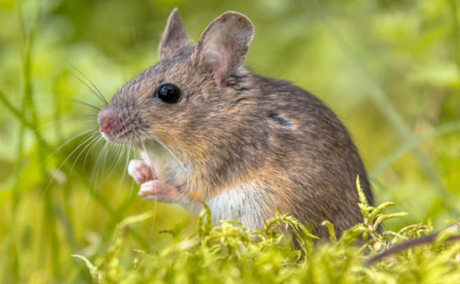 Pest Control Sydney, Insect Removal, Termite Eradication, Rat
