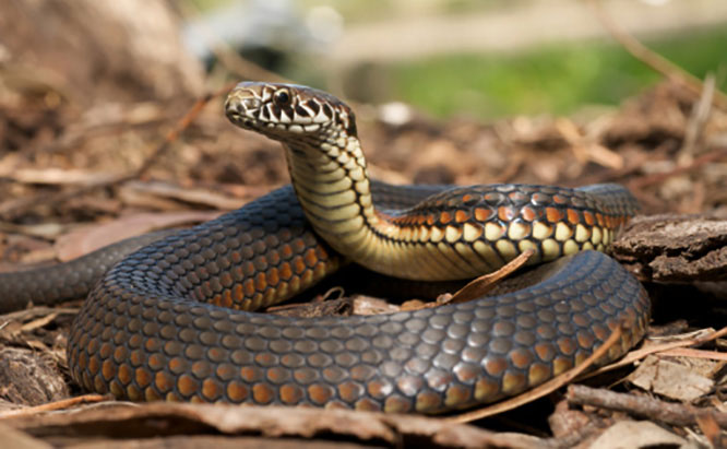 Pest Control Sydney, Insect Removal, Termite Eradication, Snake