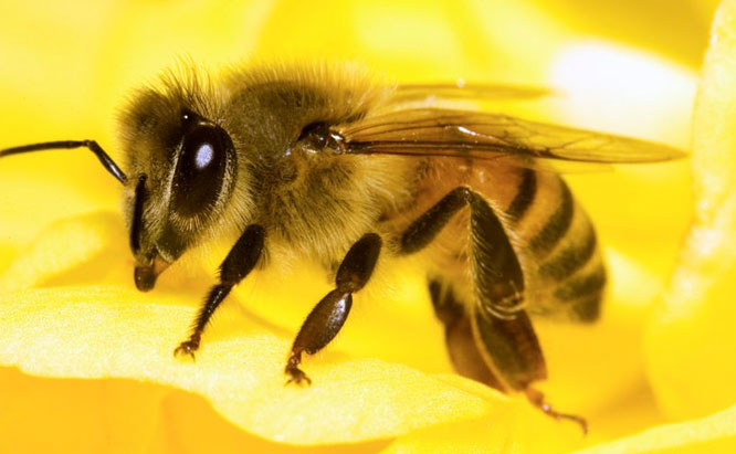 Pest Control Sydney, Insect Removal, Termite Eradication, Bees